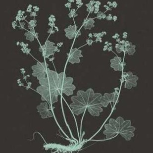 Mint And Charcoal Nature Study I Digital Print by Vision Studio,Decorative