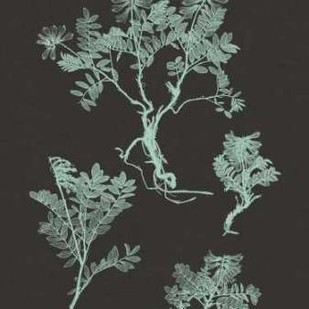 Mint And Charcoal Nature Study II Digital Print by Vision Studio,Decorative