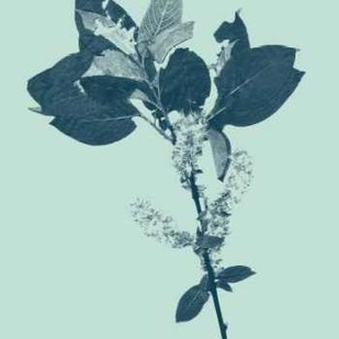 Indigo And Mint Botanical Study V Digital Print by Vision Studio,Decorative
