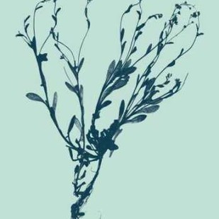 Indigo And Mint Botanical Study VI Digital Print by Vision Studio,Decorative