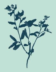 Indigo And Mint Botanical Study VII Digital Print by Vision Studio,Decorative