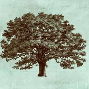Spa Tree I Digital Print by Vision Studio,Decorative