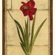 Amaryllis Panel II Digital Print by Vision Studio,Decorative