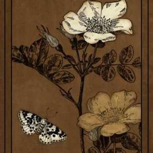 Gilded Blossom IV Digital Print by Vision Studio,Decorative