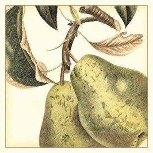 Graphic Pear Digital Print by Vision Studio,Decorative