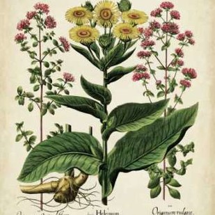 Besler Florilegium I Digital Print by Besler, Basilius,Decorative