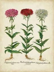Besler Florilegium IV Digital Print by Besler, Basilius,Decorative