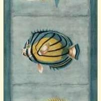 Tropical Fish Trio I Digital Print by Vision Studio,Decorative