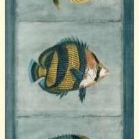 Tropical Fish Trio II Digital Print by Vision Studio,Decorative