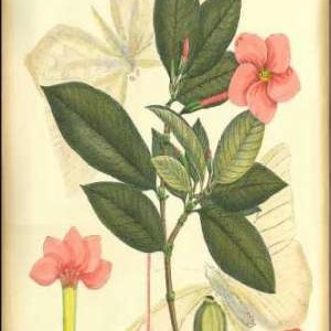 Floral Fantasia II Digital Print by Unknown,Decorative