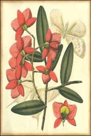Floral Fantasia III Digital Print by Unknown,Decorative