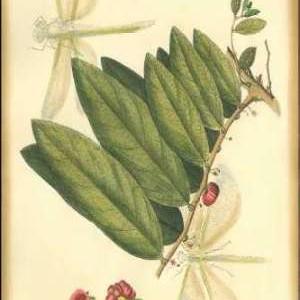 Floral Fantasia V Digital Print by Unknown,Decorative