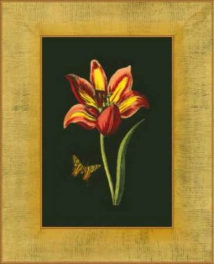 Tulip in Frame I Digital Print by Unknown,Decorative