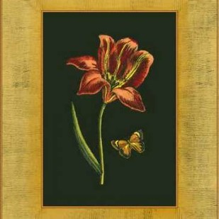 Tulip in Frame II Digital Print by Unknown,Decorative