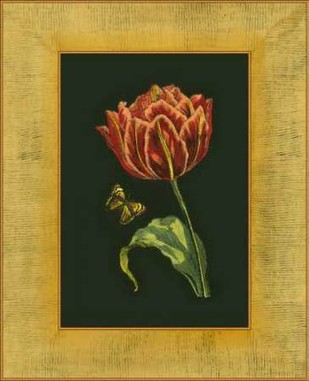 Tulip in Frame III Digital Print by Unknown,Realism