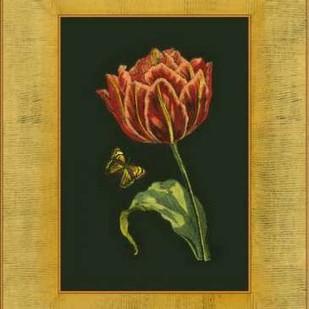 Tulip in Frame III Digital Print by Unknown,Realism