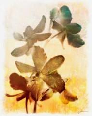 Brocade Garden III Digital Print by Burghardt, James,Impressionism