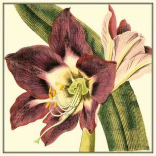 Poetic Blossoms III Digital Print by Vision Studio,Decorative