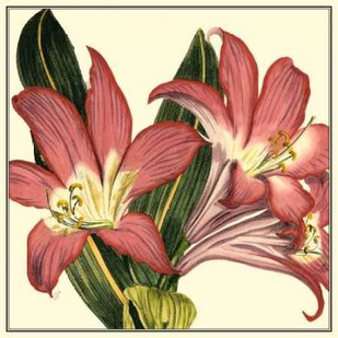 Poetic Blossoms IV Digital Print by Vision Studio,Decorative