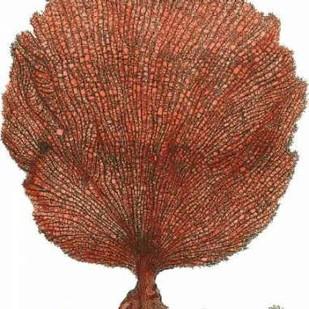 Red Coral II Digital Print by Vision Studio,Realism