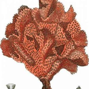 Red Coral IV Digital Print by Vision Studio,Realism