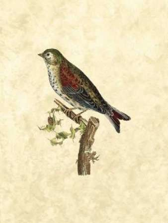 Selby Birds VI Digital Print by Selby, John,Realism