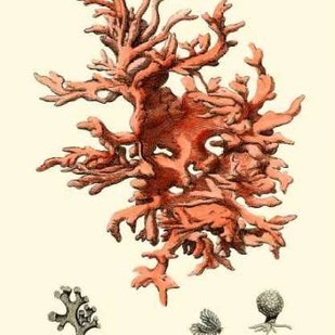 Red Coral III Digital Print by Vision Studio,Realism