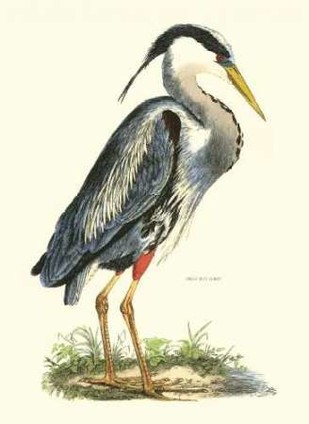 Great Blue Heron Digital Print by Selby, John,Realism