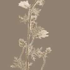 Taupe Nature Study I Digital Print by Vision Studio,Impressionism