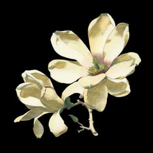 Midnight Magnolias I Digital Print by Chabal Dussurgey,Realism