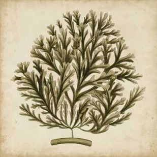 Vintage Seaweed I Digital Print by Oeder, Georg C.,Decorative