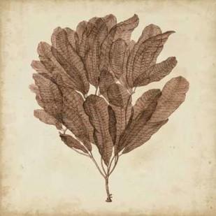 Vintage Seaweed III Digital Print by Oeder, Georg C.,Decorative