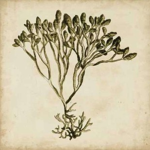 Vintage Seaweed IV Digital Print by Oeder, Georg C.,Decorative