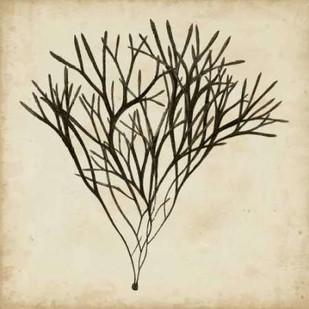 Vintage Seaweed V Digital Print by Oeder, Georg C.,Decorative
