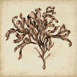 Vintage Seaweed VI Digital Print by Oeder, Georg C.,Decorative