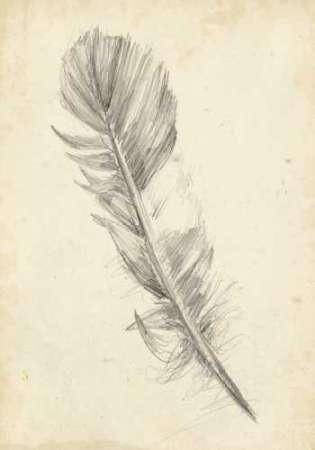 Feather Sketch I Digital Print by Harper, Ethan,Illustration