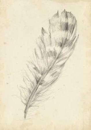 Feather Sketch II Digital Print by Harper, Ethan,Illustration