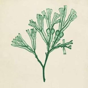 Chromatic Seaweed IV Digital Print by Vision Studio,Decorative