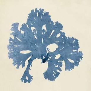 Chromatic Seaweed V Digital Print by Vision Studio,Decorative
