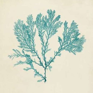 Chromatic Seaweed VIII Digital Print by Vision Studio,Decorative