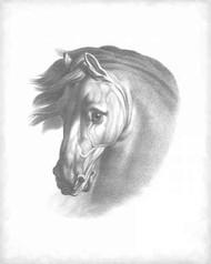 Equestrian Blueprint I Digital Print by Vision Studio,Realism