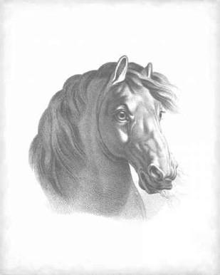 Equestrian Blueprint II Digital Print by Vision Studio,Realism