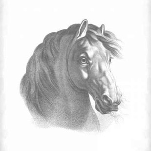 Equestrian Blueprint II Digital Print by Vision Studio,Realism
