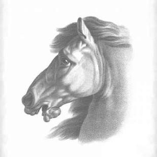 Equestrian Blueprint III Digital Print by Vision Studio,Realism