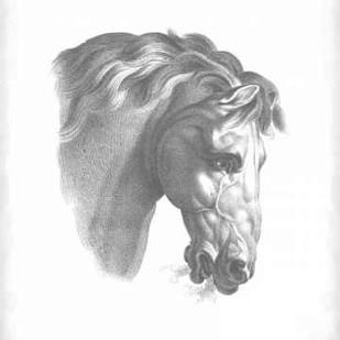 Equestrian Blueprint IV Digital Print by Vision Studio,Realism
