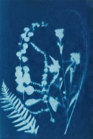 Cyanotype No.16 Digital Print by Guthrie, Jenna,Impressionism
