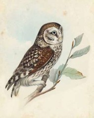 Meyer Little Owl Digital Print by Meyer, H.L.,Decorative