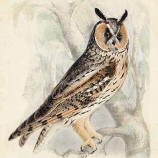 Meyer Long-Eared Owl Digital Print by Meyer, H.L.,Decorative