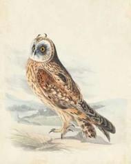 Meyer Hawk Owl Digital Print by Meyer, H.L.,Decorative