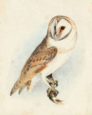Meyer Barn Owl Digital Print by Meyer, H.L.,Decorative